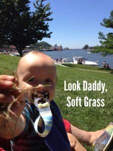 Ziggy Enjoying the Grass